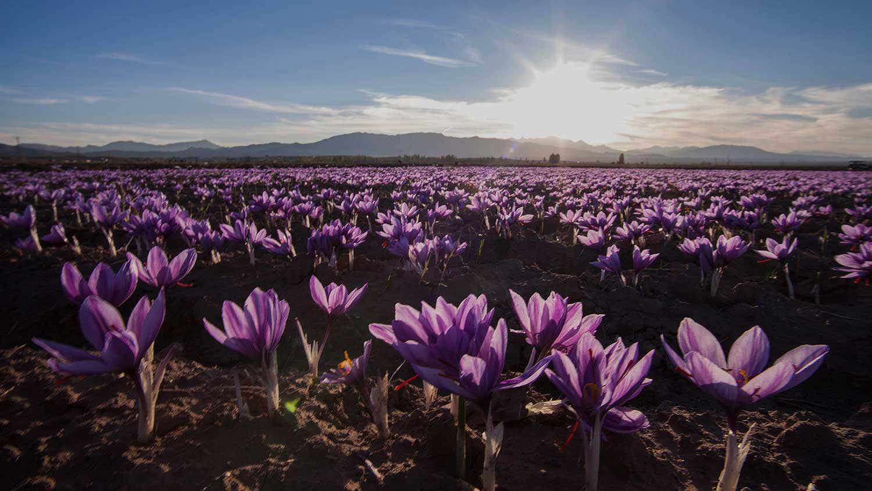 earthi-ayurveda-saffron